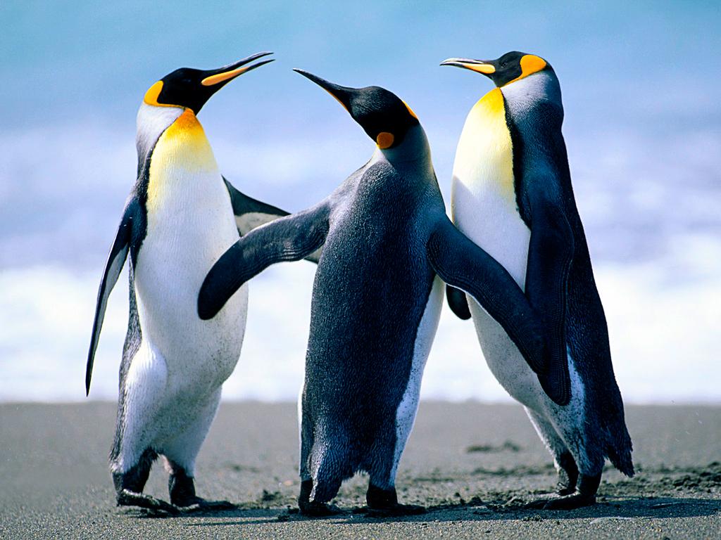 penguins-5e